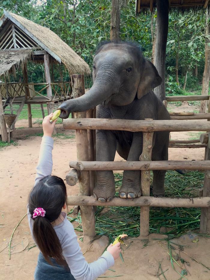LAOS ELEPHANT VILLAGE