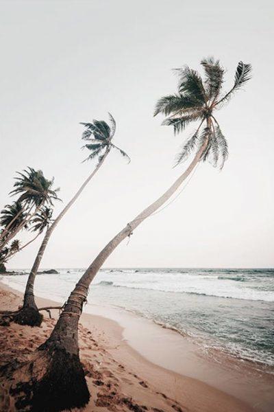 18-sri-lanka-palms